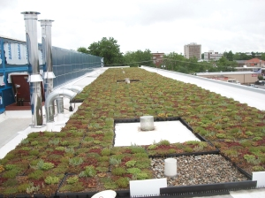 Careful design of a vegetative roof will promote plant growth, provide protection from wind and offer good water retention